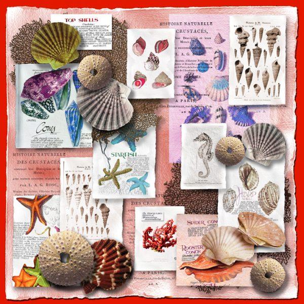 shells-grandine+