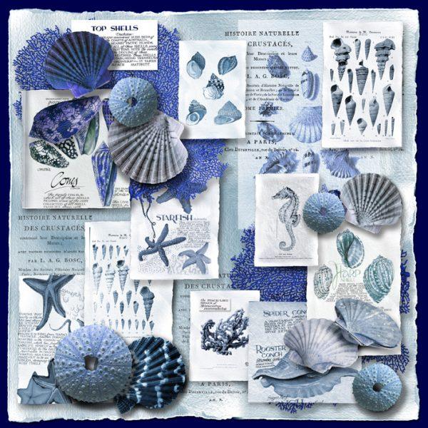 shells-navy+